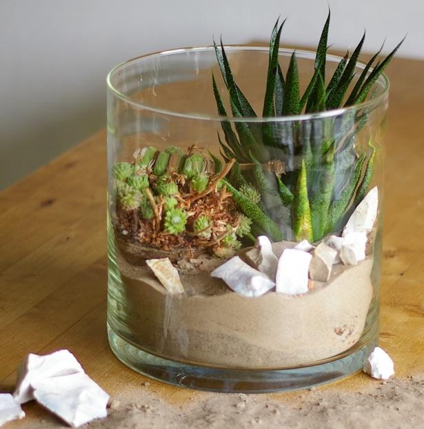 Deko Ideen Pflanzen