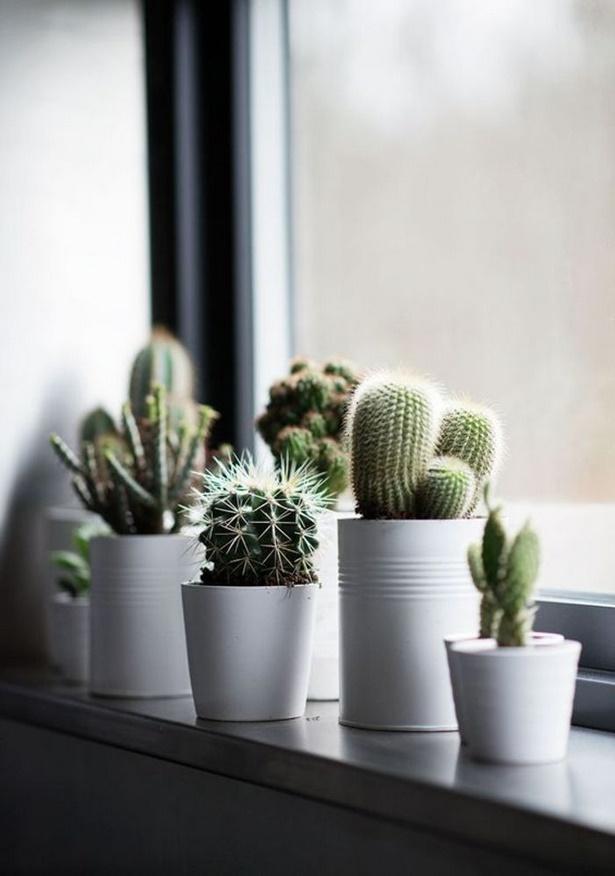 Image Result For Ideen Zimmerpflanzen Deko Arrangements