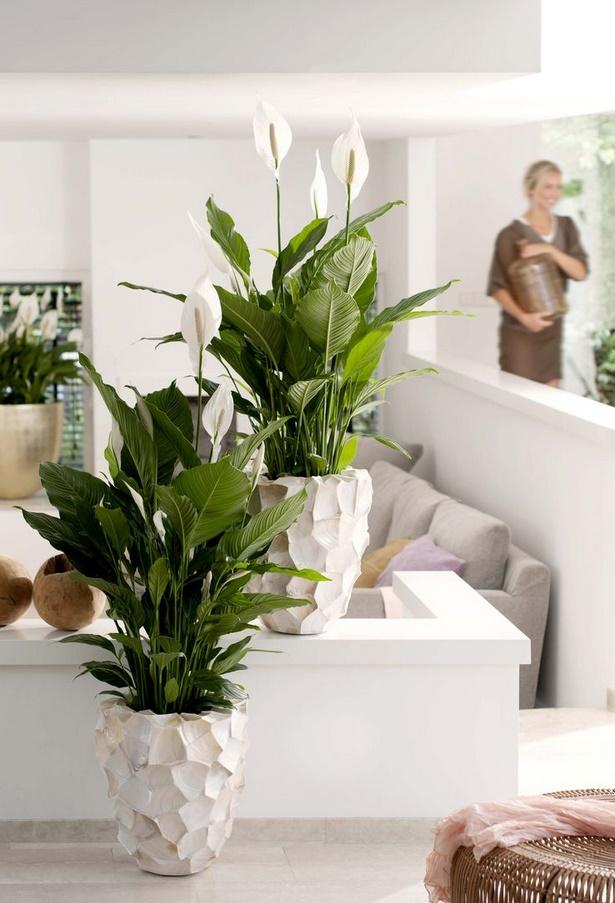 pflanzen deko wohnzimmer. Black Bedroom Furniture Sets. Home Design Ideas