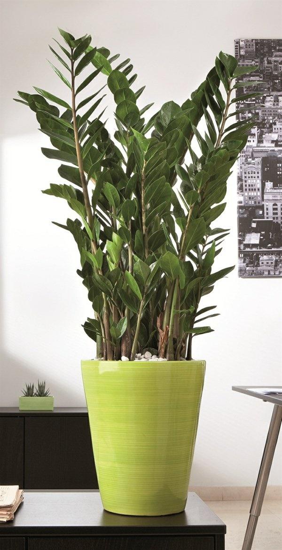 Zimmerpflanzen deko ideen for Zimmerpflanzen wohnzimmer