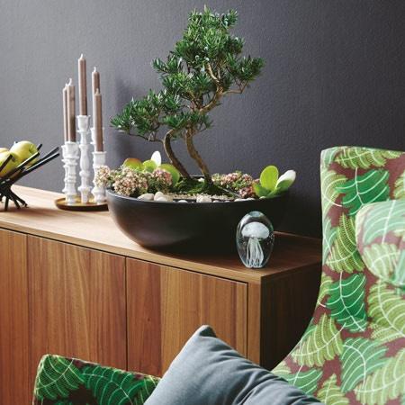 zimmerpflanzen deko ideen. Black Bedroom Furniture Sets. Home Design Ideas