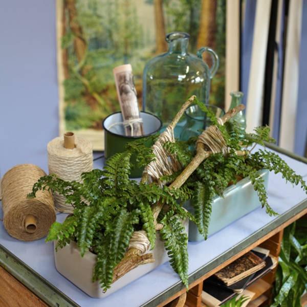 Wohnzimmer Deko Pflanzen: Zimmerpflanzen Deko Ideen